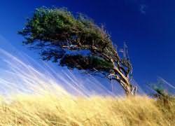 к чему снится ветер