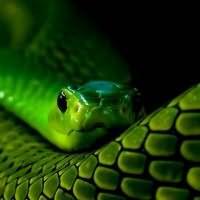 к чему снится змея в воде
