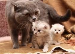 к чему снятся кошки и котята