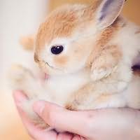 к чему снятся кролики маленькие