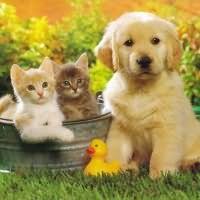 К чему снятся животные