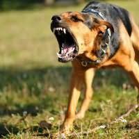 к чему снятся злые собаки