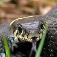к чему снятся змеи ужи