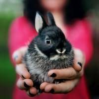 к чему женщине снятся кролики