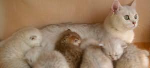 кошка родила котят во сне
