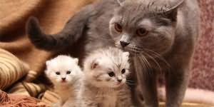к чему снится кошка с котятами