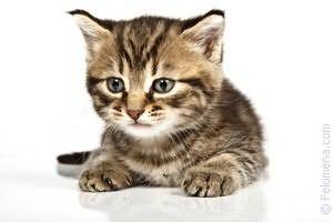 К чему снятся мыши и кошки вместе