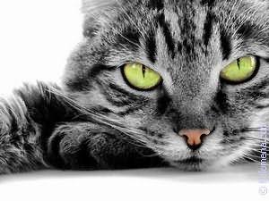 выгнать Кота по соннику