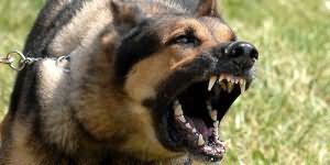 сонник кусает собака
