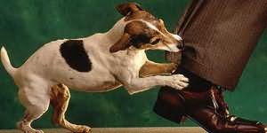 сонник укус собаки