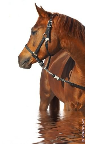 Лошадь с жеребенком по соннику
