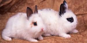 сонник маленькие кролики