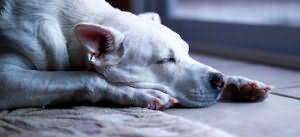 сонник мертвая собака