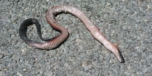 к чему снится мертвая змея