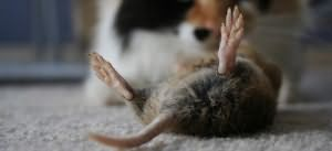 мёртвая мышка во сне