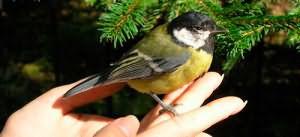 держать птичку в руках
