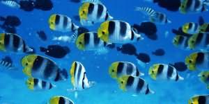 сонник рыба в воде