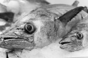 Сонник Рыба красная