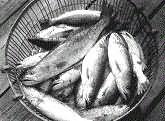 Сонник Ловить рыбу, к чему снится ловля рыбы во сне