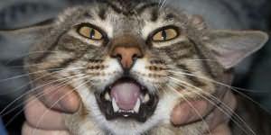 к чему снится убить кота