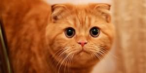 убить рыжего кота