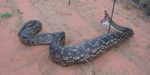 сонник убить змею