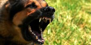 к чему снится укус собаки