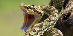 к чему снится как змея пытается укусить