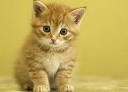 во сне видеть котят маленьких