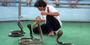 номер со змеями