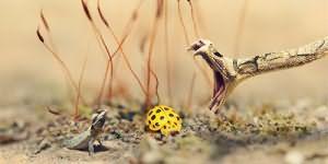 сонник змея нападает