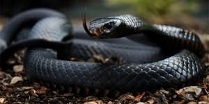 к чему снится змея нападает