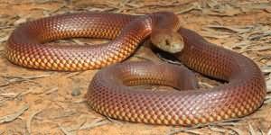 змея заползла в дом